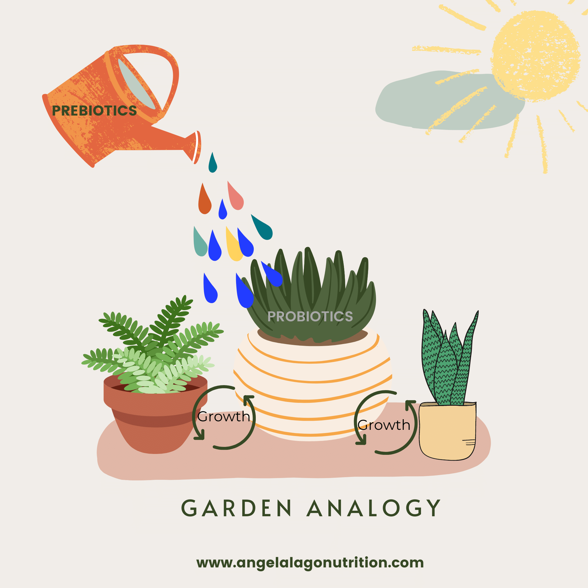 Garden Analogy of how prebiotics feed the good bacteria (probiotics) in our gut.